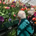 Admiring the blooming tulips!